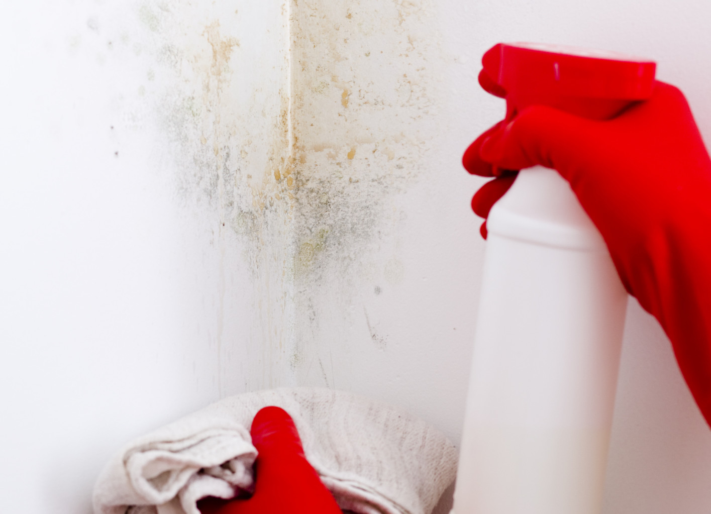 Mencegah Jamur di Dinding